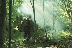 Поведение при потере ориентировки в лесу