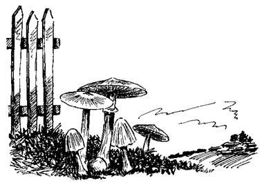 Противоалкогольное свойство гриба-навозника