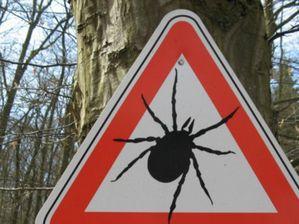 Нападение лесных клещей