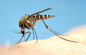 Укусы насекомых: профилактика и лечение