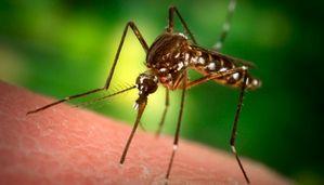 Укусы насекомых: профилактика и первая помощь