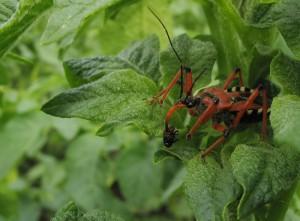 Виды насекомых опасных для человека