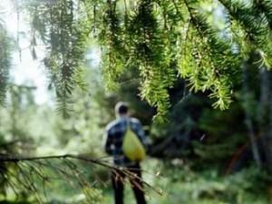 Как остаться в живых в лесу