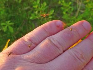 Комариные войны - насекомые не пройдут