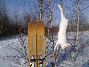 Зимняя охота. Как добыть зайца?