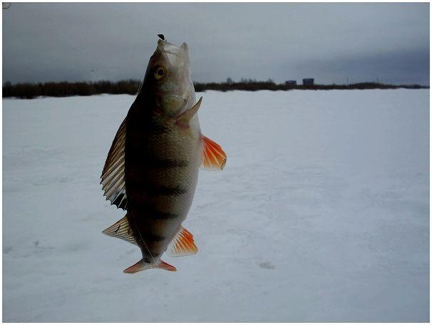 Индустриальная рыбалка
