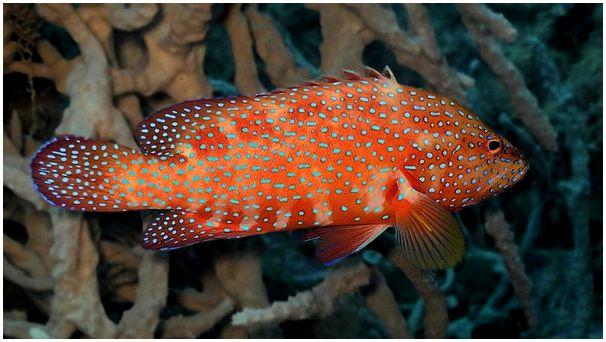 Коралл кораллу рознь