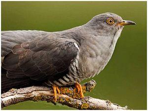 Легенды о птицах