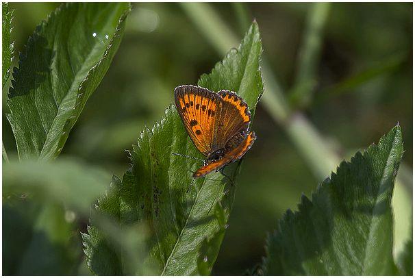 Летние краски среди зимы : Дневные Бабочки. Часть №2