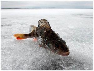 Рыбинка, Борок: на этот раз – без рыбы