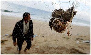 25 миллионов птиц ежегодно незаконно добывается в Средиземноморье