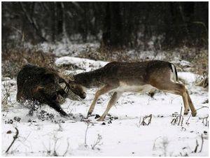 До лисицы и бобра охотников мало