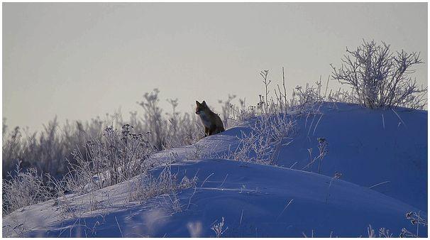 Фототрофеи: Млекопитающие