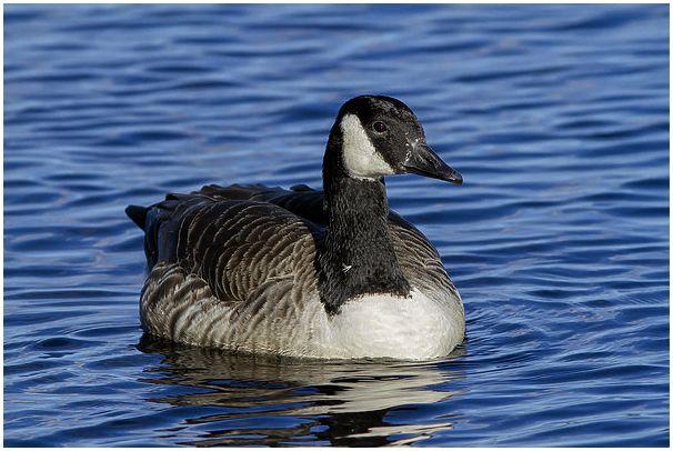 Фототрофеи уходящего сезона: Околоводные птицы