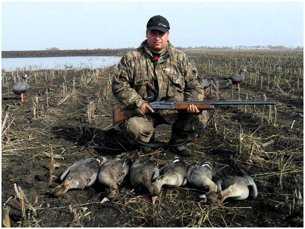 Из практики охоты на гусей