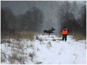 К вопросу рационального использования ресурсов лося в Вологодской области