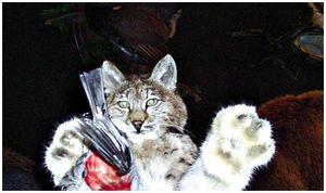 Как  сохранить  охотничий  трофей?