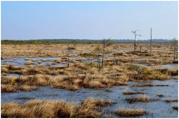Мартовские вести с болот