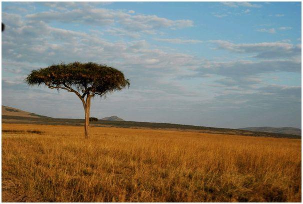 Моя Африка