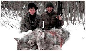 На волков