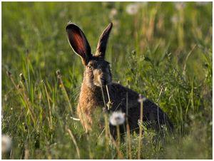 О совершенствовании законодательства в сфере государственного регулирования оценки объектов животного мира