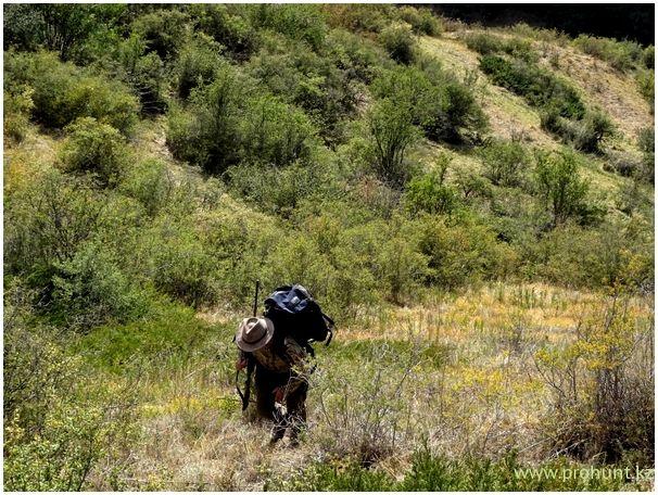 Охота летом на волков в Казахстане