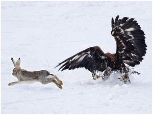 Охота в России: вчера и сегодня