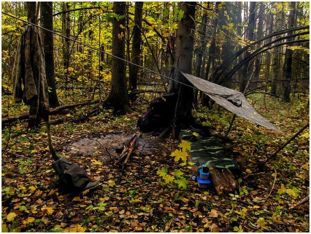 Осенние скитания или в поисках лосей