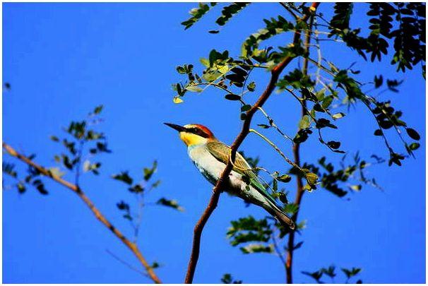 Птицы : Некоторые представители