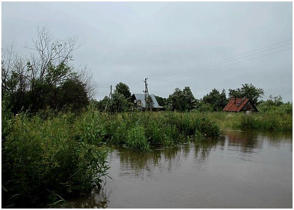В Грязовецком районе Вологодской области часть деревни затопило из-за бобров