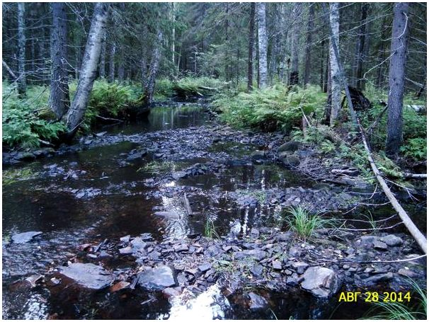 В лес за тетеревами