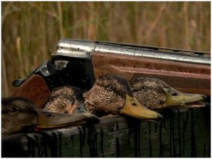 Вести с охоты