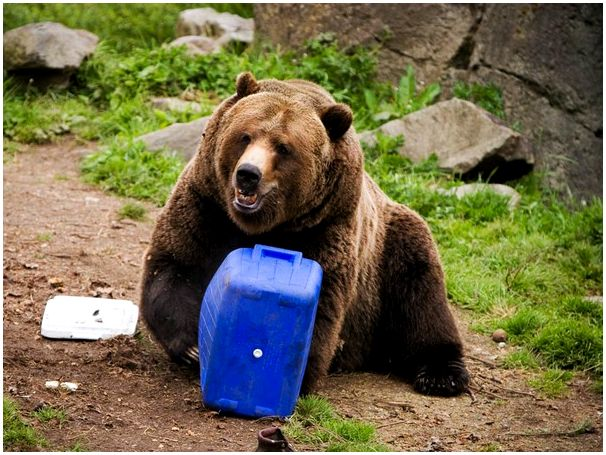 А нужен ли, Вам медведь?