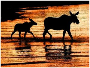 Дисциплина и этика облавной охоты