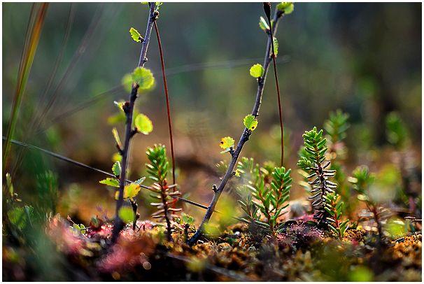Гусиные болота в летний период