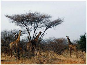Мекка африканского сафари