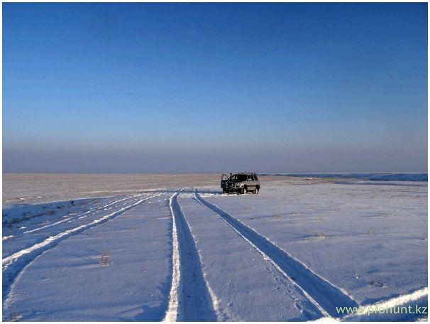 На волков в Казахстане