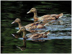 Наше «Васюткино озеро»