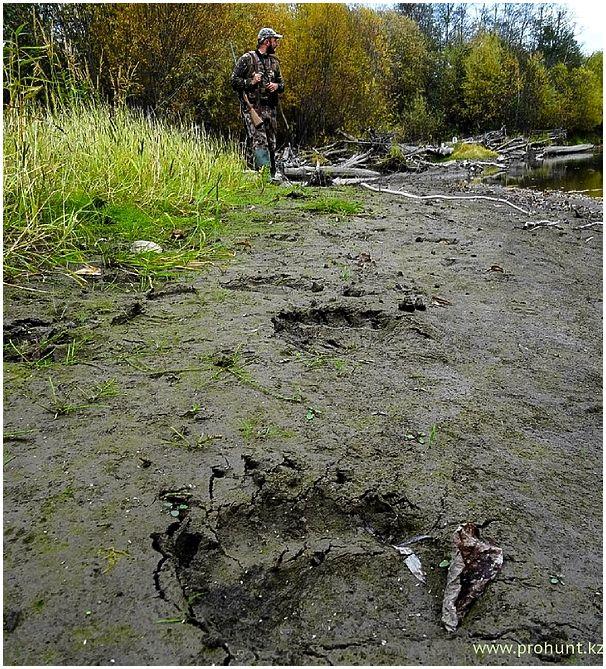 Охота на гигантского камчатского лося