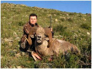 Охота на хангайского аргали: монгольские традиции