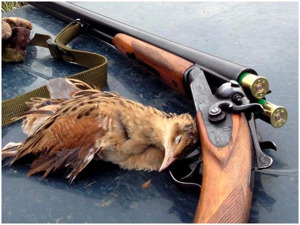 Перед закрытием охоты