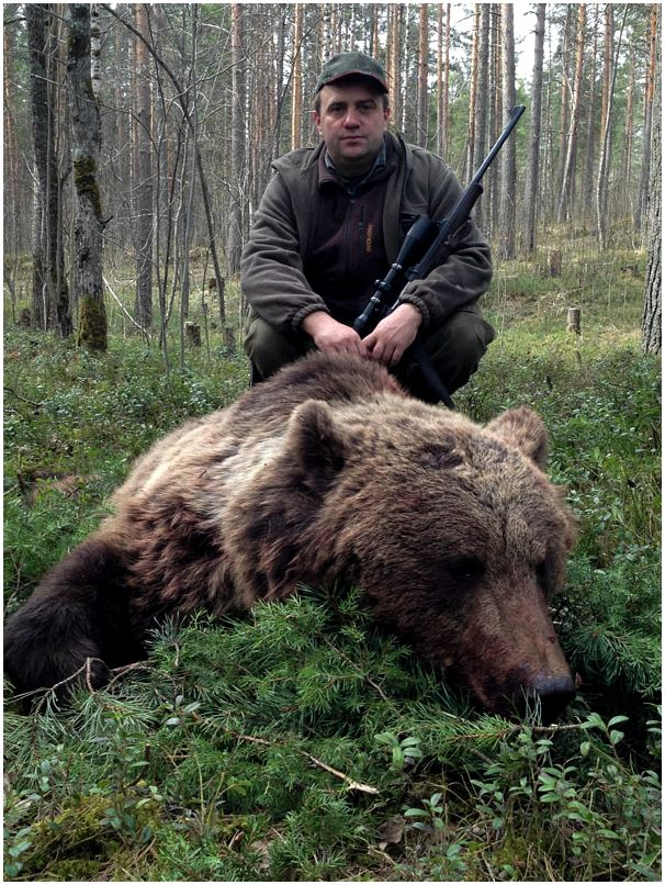 Первый медведь