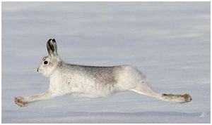 Первый охотничий снег