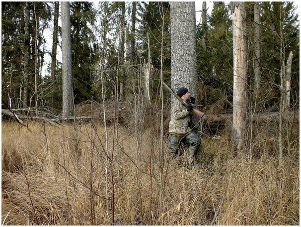 По лесу, с камерой и ружьём