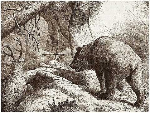 По медвежьим следам…