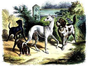 Повадки животных