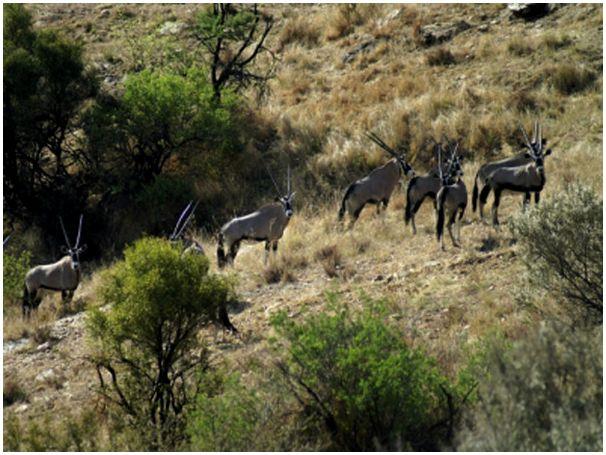 Сафари в Намибии