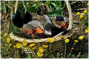 Щи богатые с мясом весеннего селезня