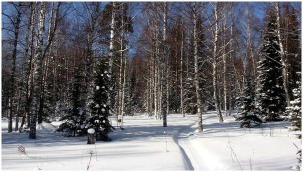 Зима и волки