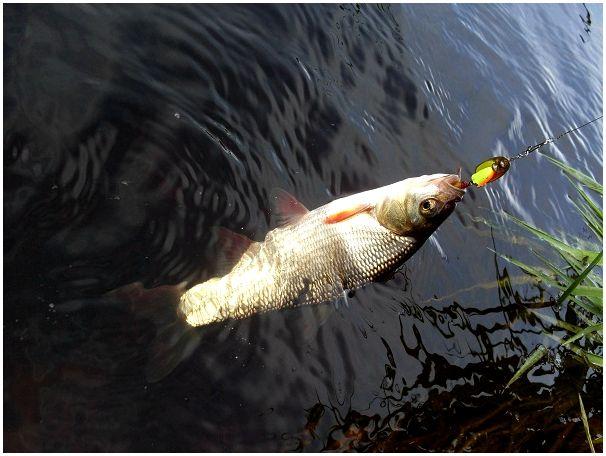 Долгожданная «случайная» рыбалка